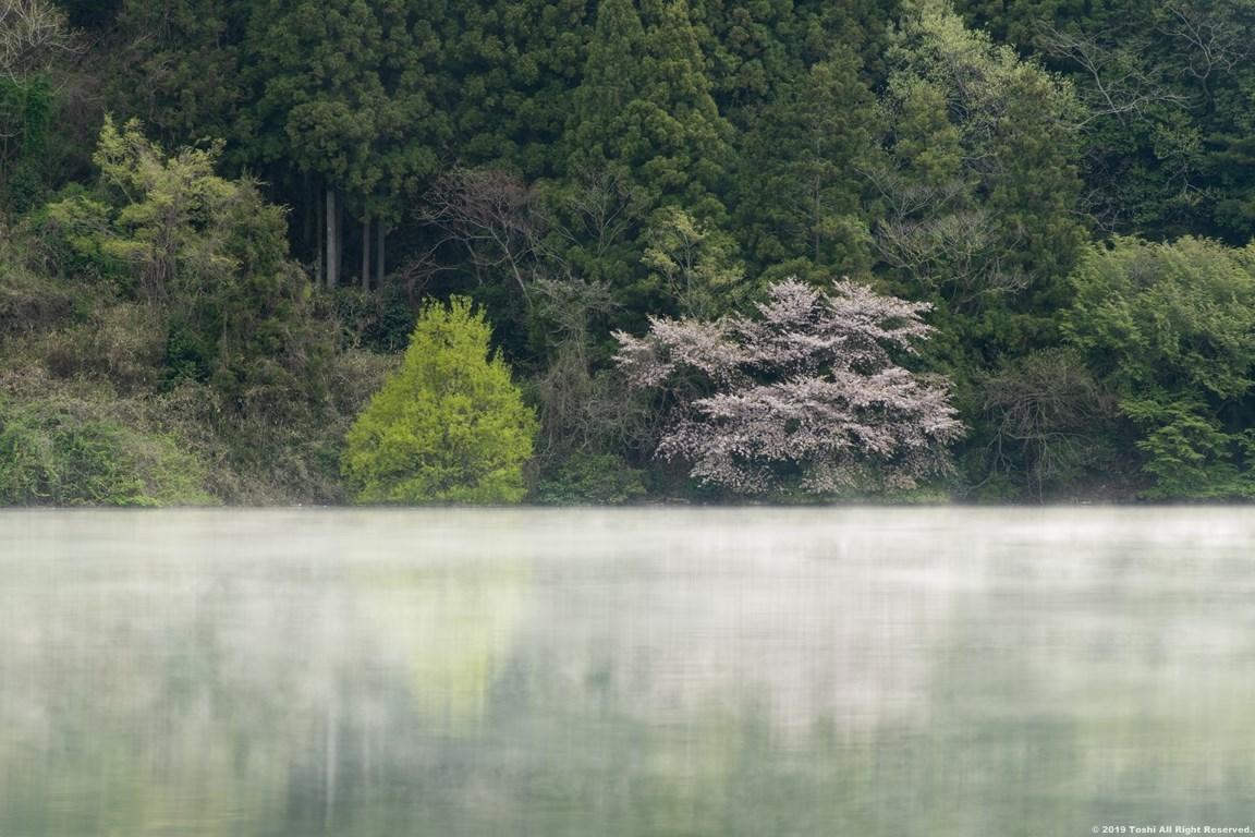 名残の桜 室生湖 2 立ちこめる川霧_c0350572_18251927.jpg