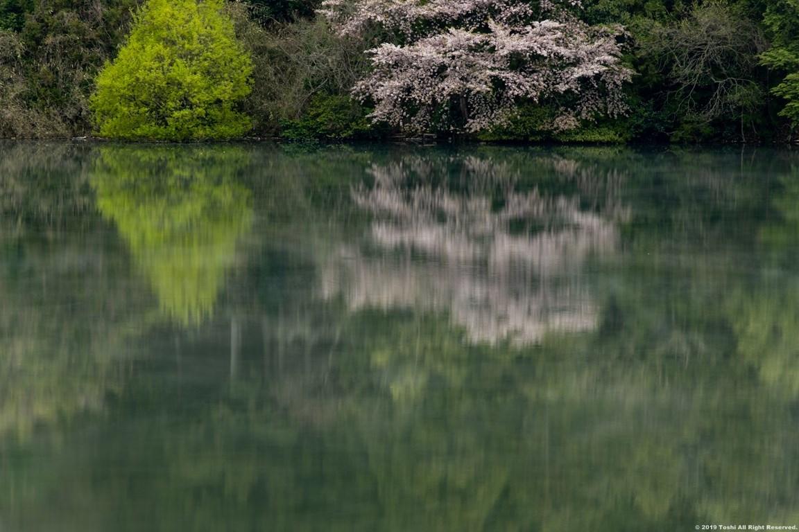 名残の桜 室生湖 2 立ちこめる川霧_c0350572_18311232.jpg