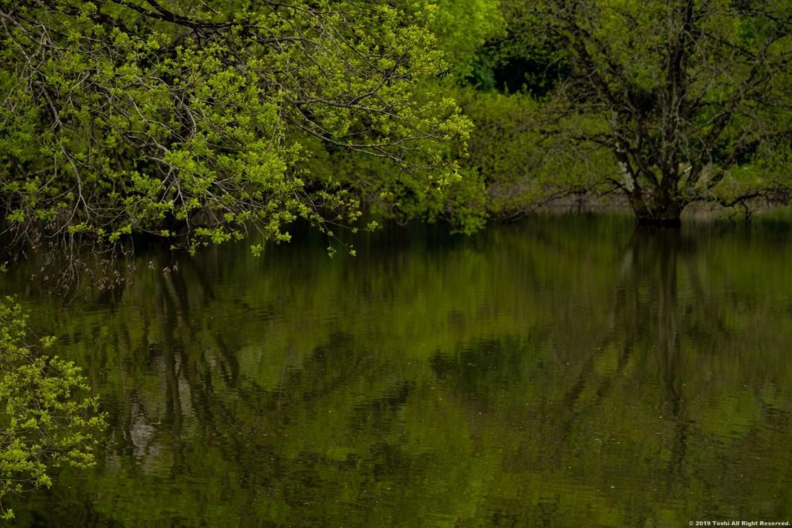 名残の桜 室生湖 2 立ちこめる川霧_c0350572_18321260.jpg