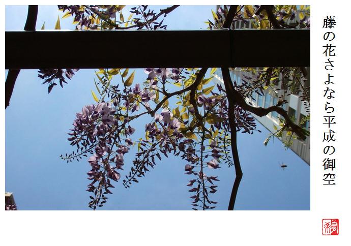 藤の花さよなら平成の御空_a0248481_08282877.jpg