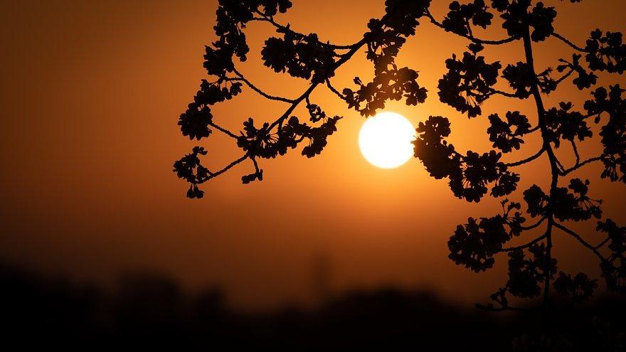 黄昏を見つめる桜たち_d0353489_16161407.jpg