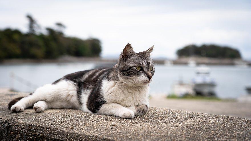 猫の島_d0353489_23250266.jpg