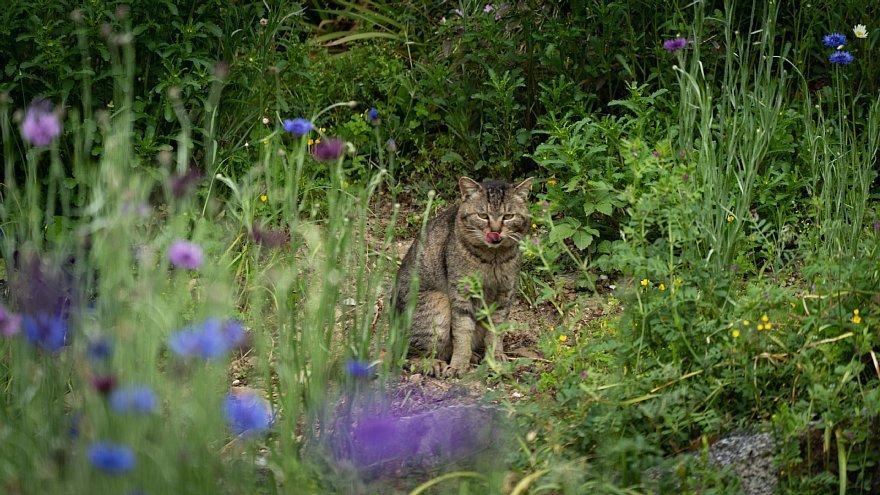 猫の島_d0353489_23251386.jpg