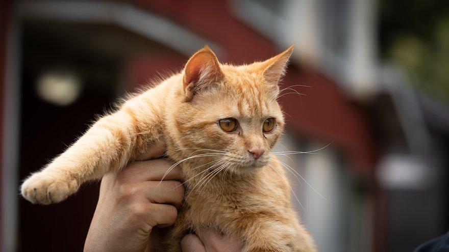 猫の島_d0353489_23252366.jpg
