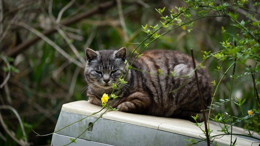 猫の島_d0353489_23253076.jpg