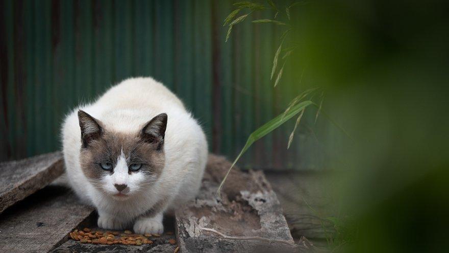 猫の島_d0353489_23253313.jpg