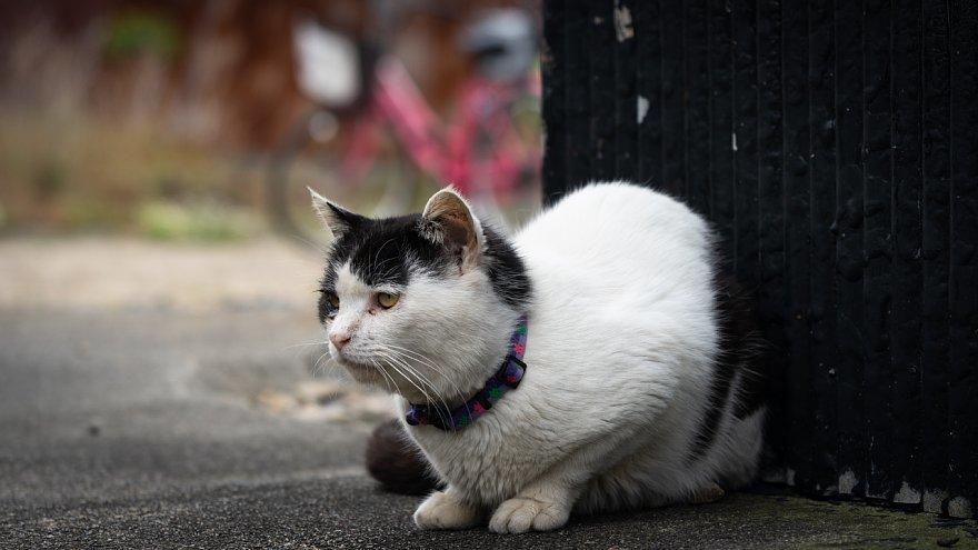 猫の島_d0353489_23253854.jpg