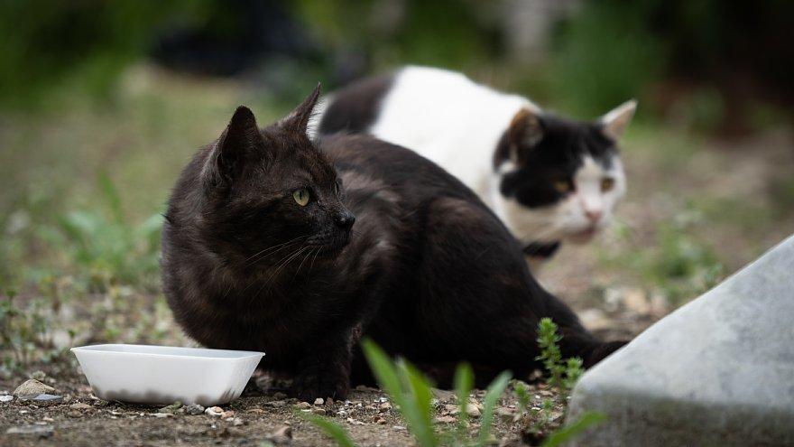 猫の島_d0353489_23254242.jpg