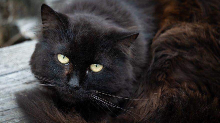 猫の島_d0353489_23254739.jpg