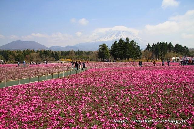 富士芝桜まつり_f0374092_17572500.jpg