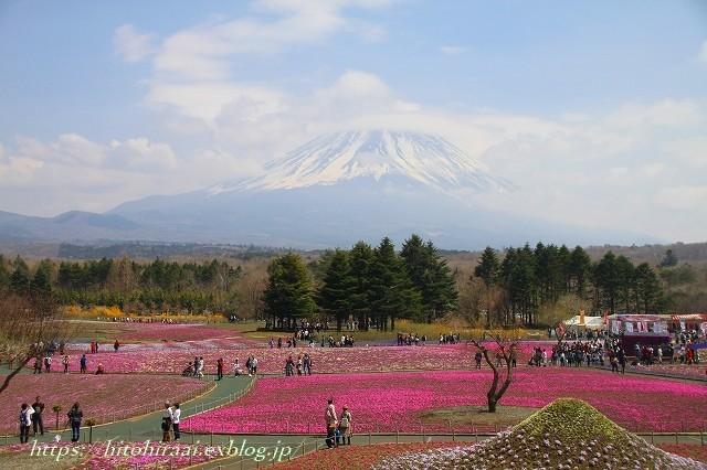 富士芝桜まつり_f0374092_17584313.jpg