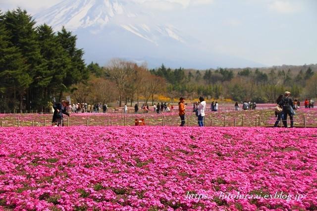 富士芝桜まつり_f0374092_18021016.jpg