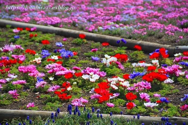 富士芝桜まつり_f0374092_18023841.jpg
