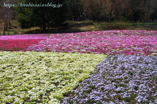 富士芝桜まつり_f0374092_18031920.jpg
