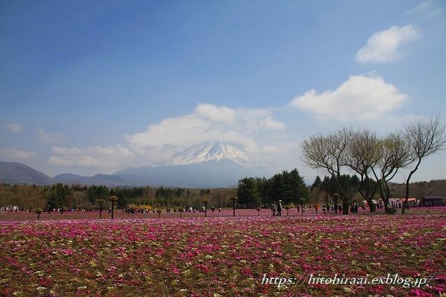 富士芝桜まつり_f0374092_18033618.jpg