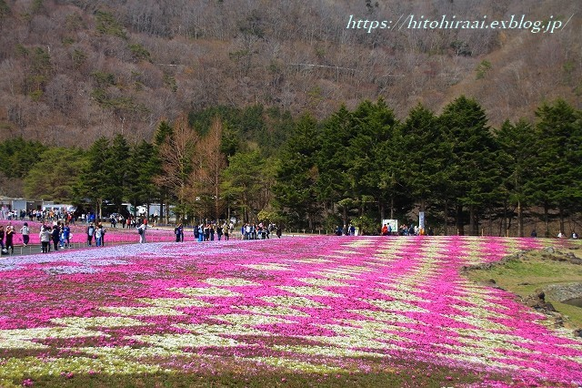 富士芝桜まつり_f0374092_18052135.jpg