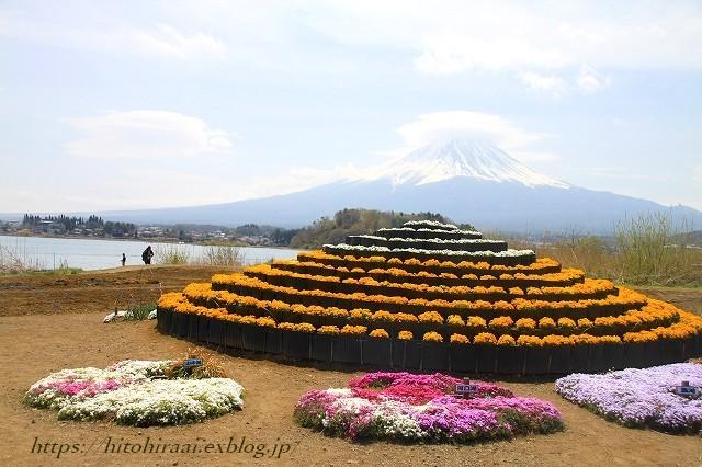 富士山と桜 河口湖畔 大石公園_f0374092_18172036.jpg