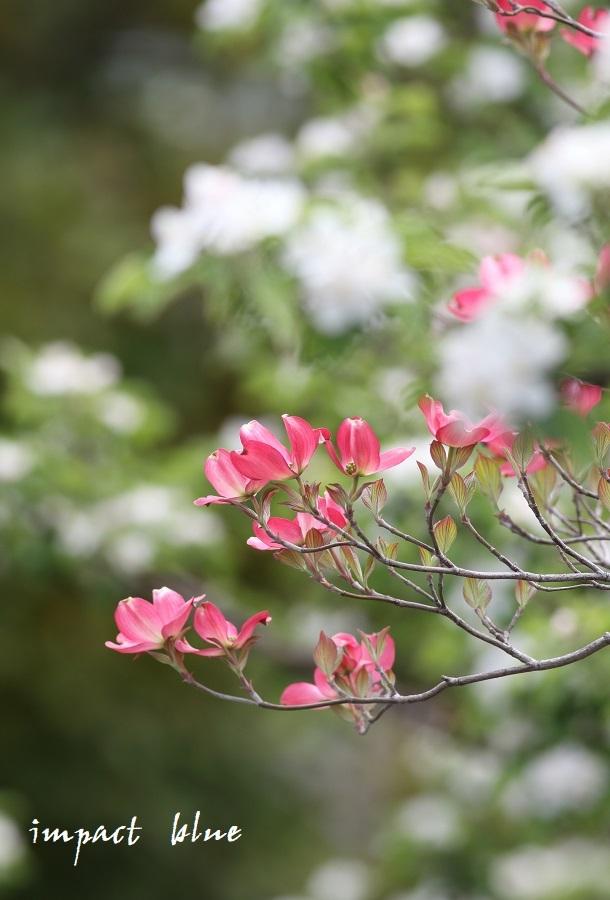 アイガモ公園の花壇にて(^^)/ ~続~_a0355908_19425905.jpg