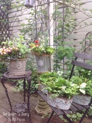 Mis plantas como adornos.._e0365614_21203808.jpg