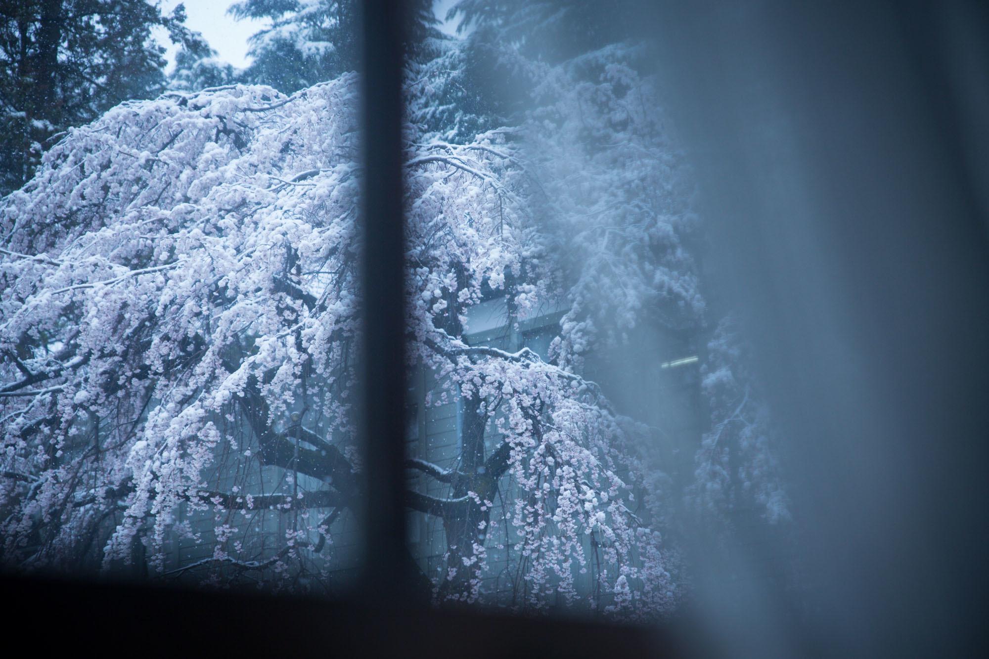 なごり雪の窓辺~あがたの森の枝垂桜~_d0349418_20464963.jpg