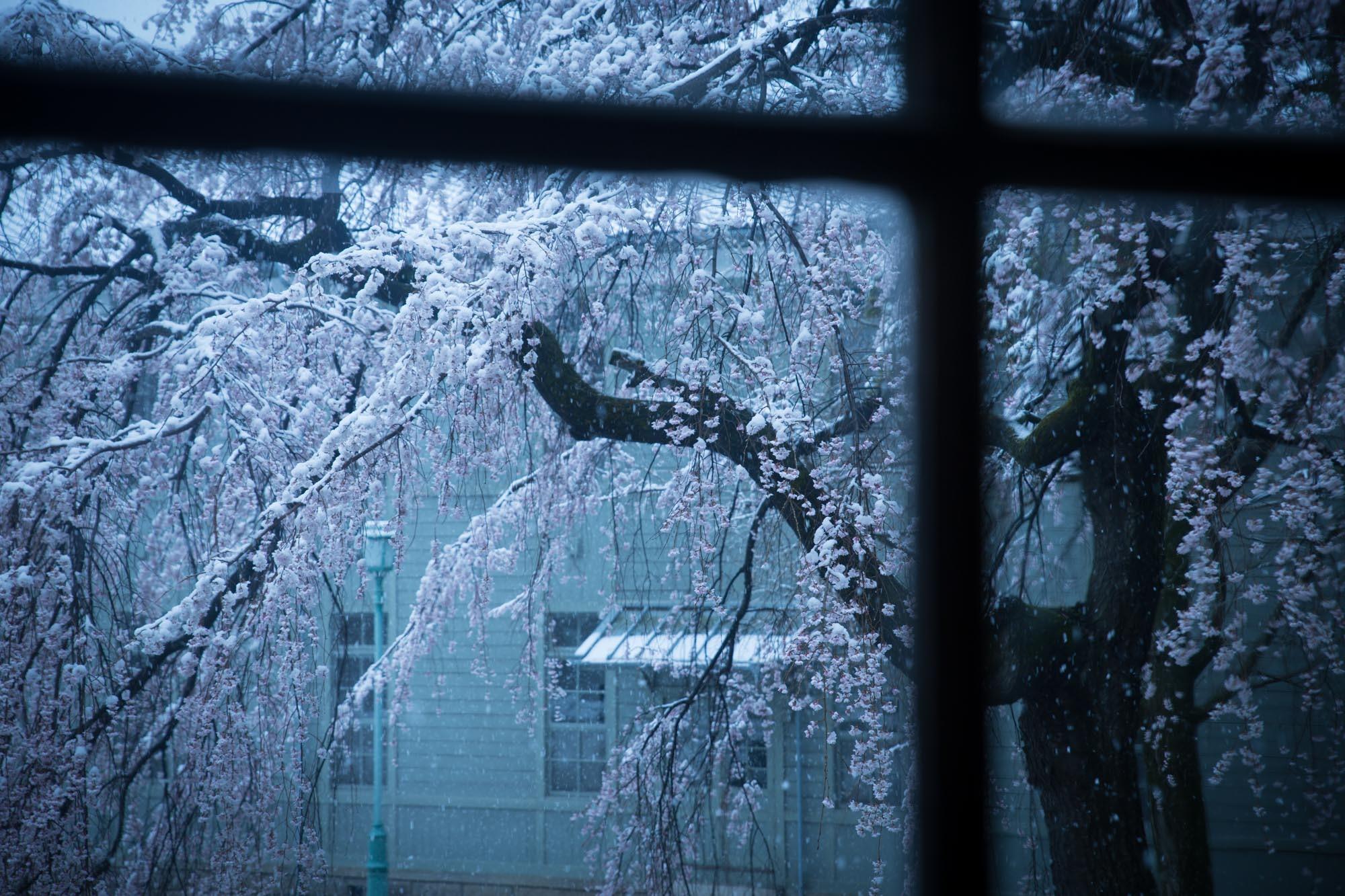 なごり雪の窓辺~あがたの森の枝垂桜~_d0349418_20475086.jpg