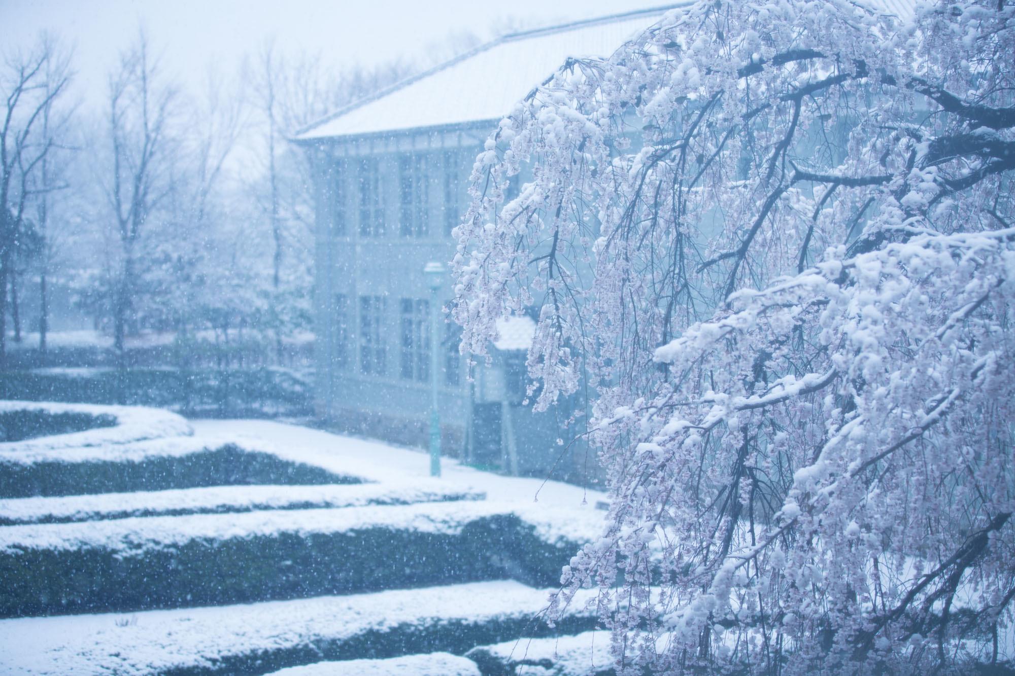 なごり雪の窓辺~あがたの森の枝垂桜~_d0349418_20484747.jpg