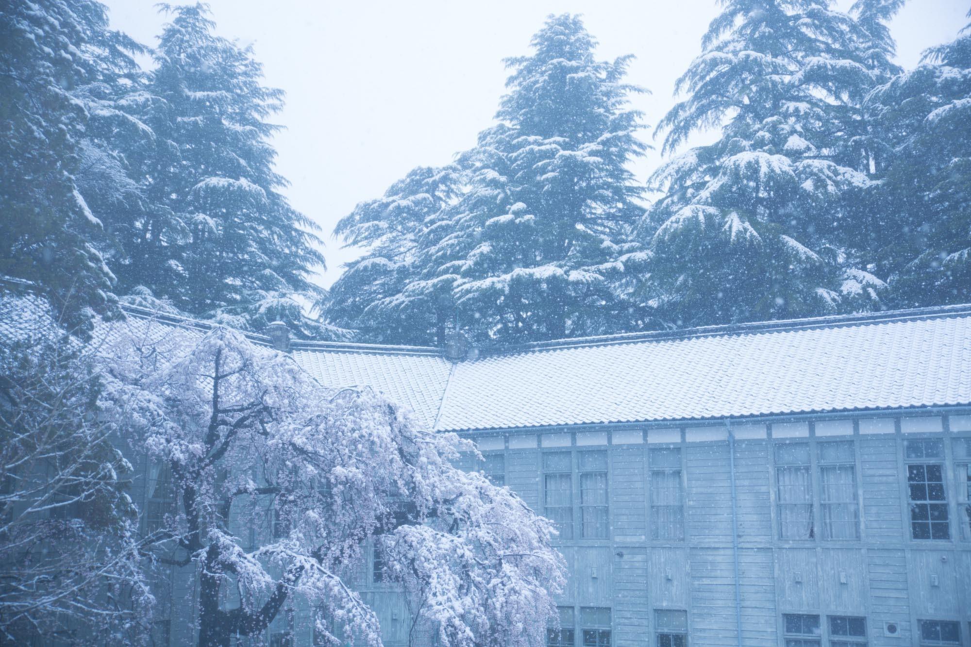 なごり雪の窓辺~あがたの森の枝垂桜~_d0349418_20485799.jpg