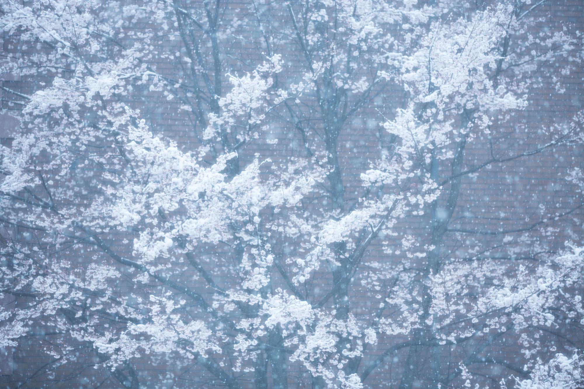 なごり雪の窓辺~あがたの森の枝垂桜~_d0349418_20492623.jpg
