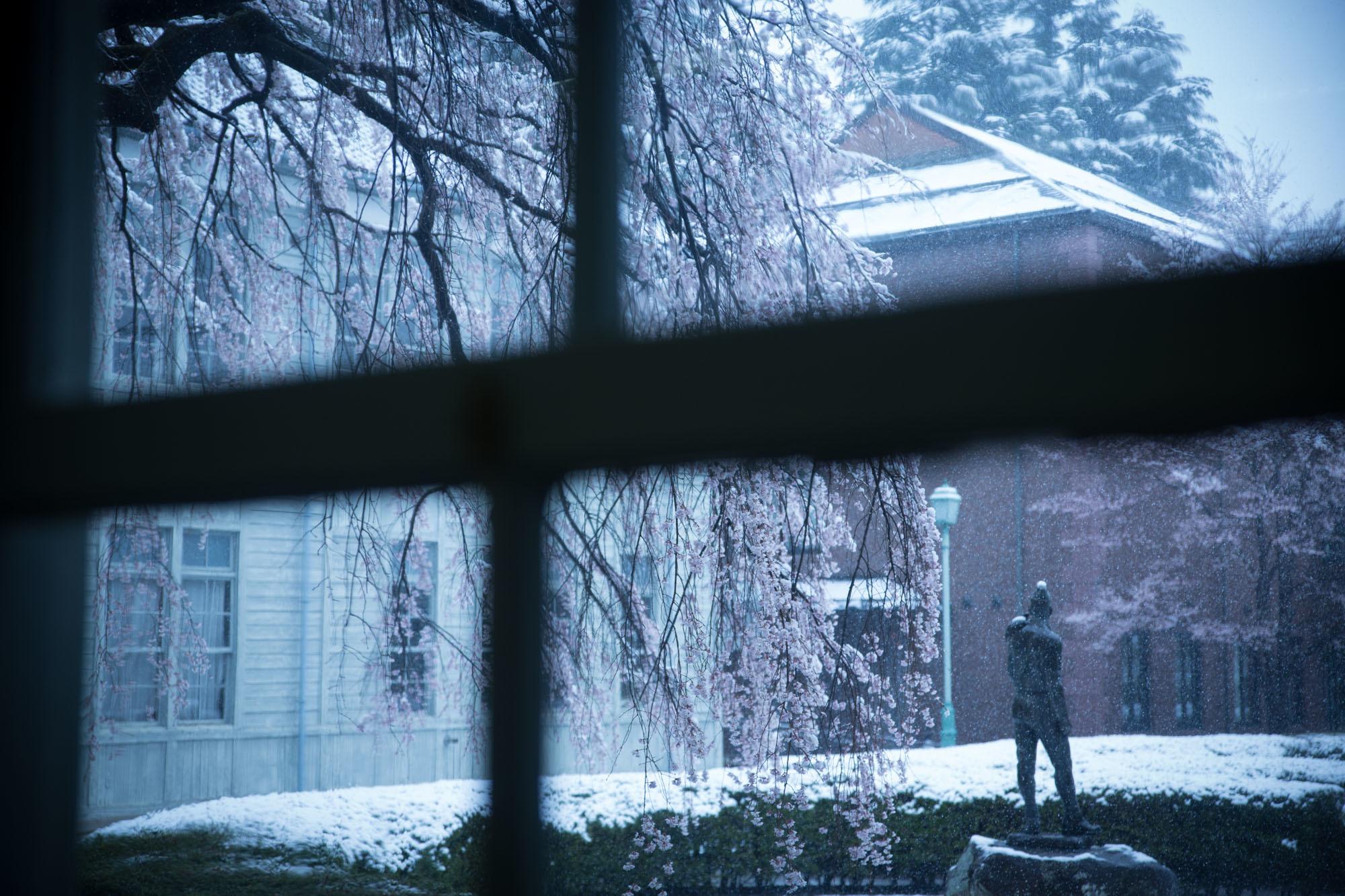 なごり雪の窓辺~あがたの森の枝垂桜~_d0349418_20493710.jpg