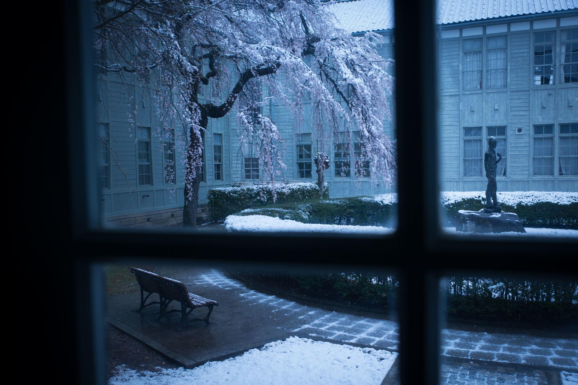 なごり雪の窓辺~あがたの森の枝垂桜~_d0349418_20501737.jpg