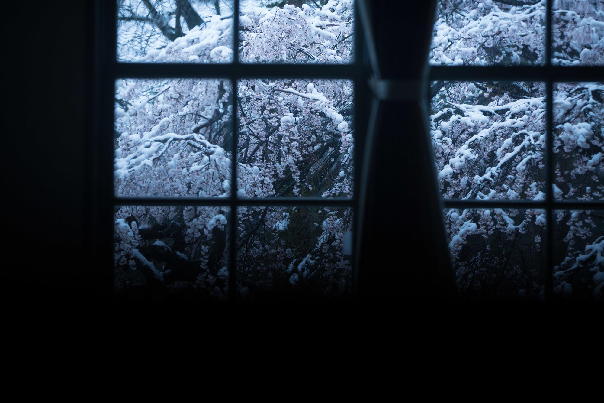 なごり雪の窓辺~あがたの森の枝垂桜~_d0349418_20510516.jpg