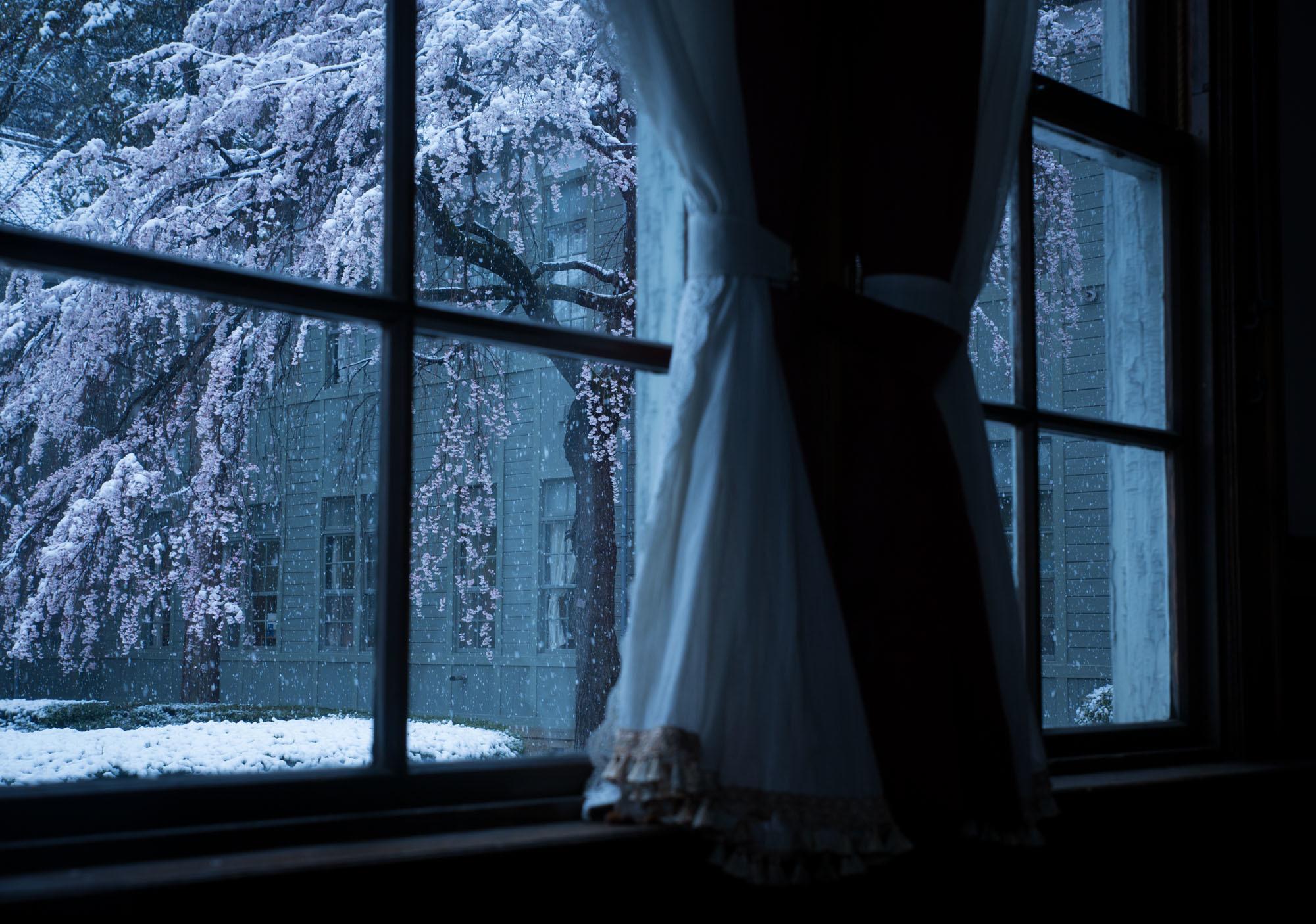 なごり雪の窓辺~あがたの森の枝垂桜~_d0349418_20515215.jpg