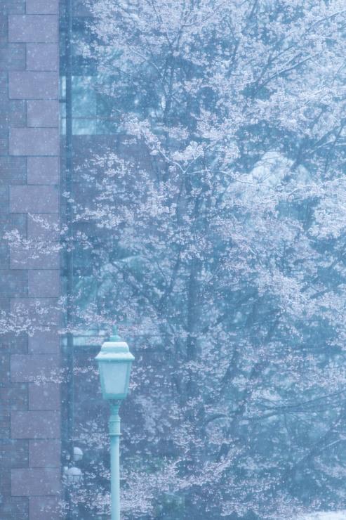 なごり雪の窓辺~あがたの森の枝垂桜~_d0349418_21054099.jpg