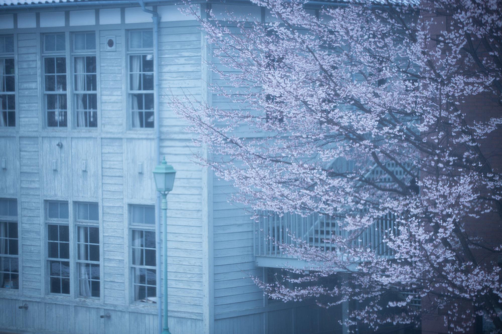 なごり雪の窓辺~あがたの森の枝垂桜~_d0349418_21073673.jpg