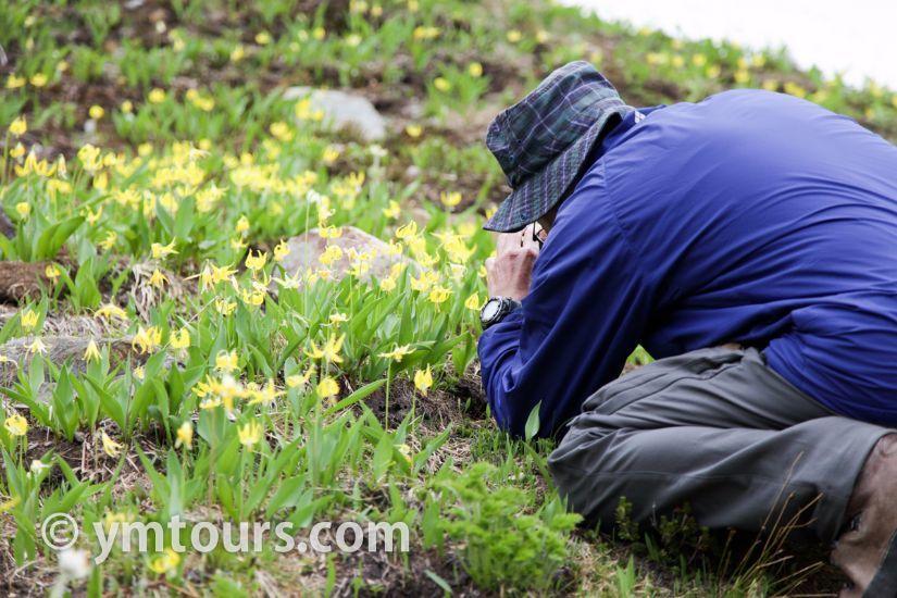 カナディアンロッキー 夏のハイキングシーズン到来間近! 高山植物の魅力と種類を大特集します。_d0112928_05430048.jpg