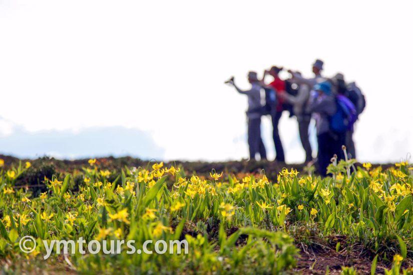 カナディアンロッキー 夏のハイキングシーズン到来間近! 高山植物の魅力と種類を大特集します。_d0112928_05433655.jpg