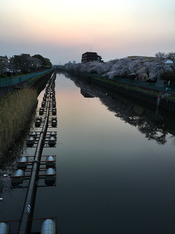 春の夕暮れ~今年の桜  2019/04/07-sun_f0031535_16042681.jpg