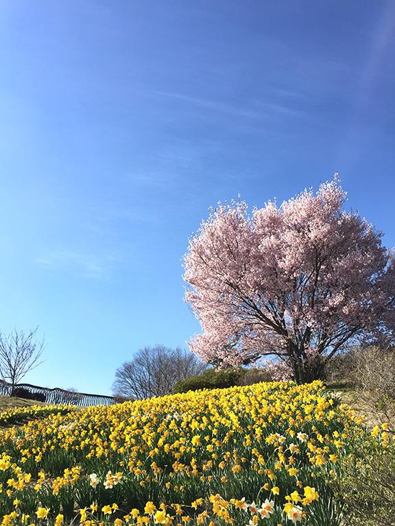 春の軽井沢 秘密の飲み会  2019/04/20-sat~21-sun_f0031535_17522057.jpg