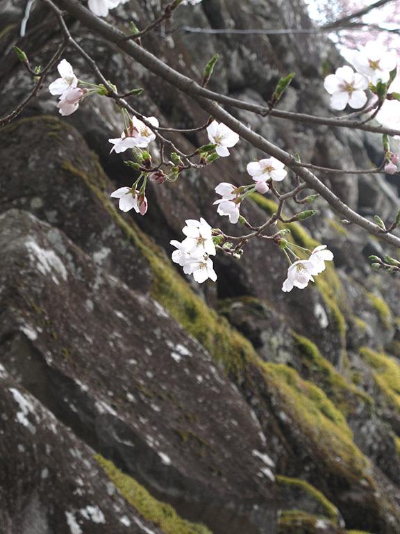 春の軽井沢 秘密の飲み会  2019/04/20-sat~21-sun_f0031535_17532085.jpg