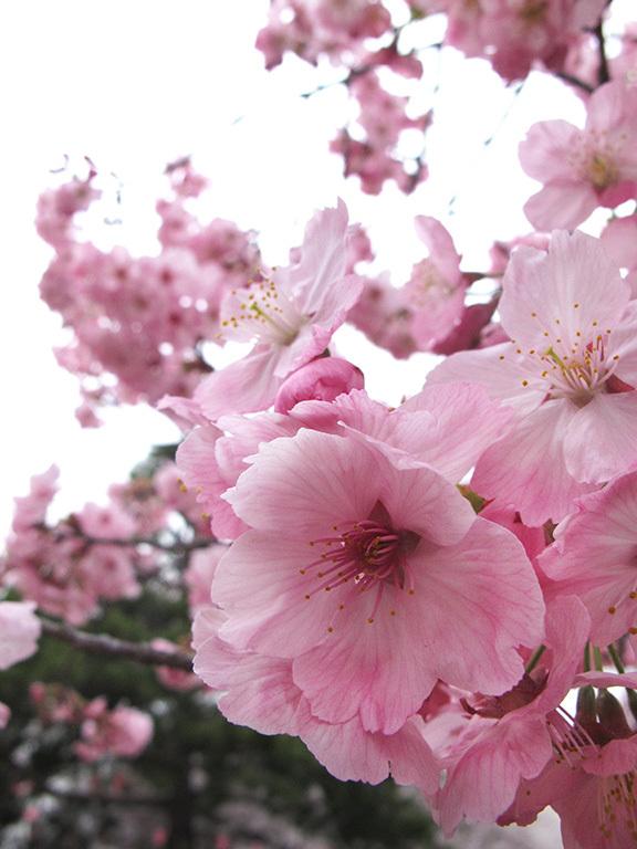 春の軽井沢 秘密の飲み会  2019/04/20-sat~21-sun_f0031535_17532730.jpg
