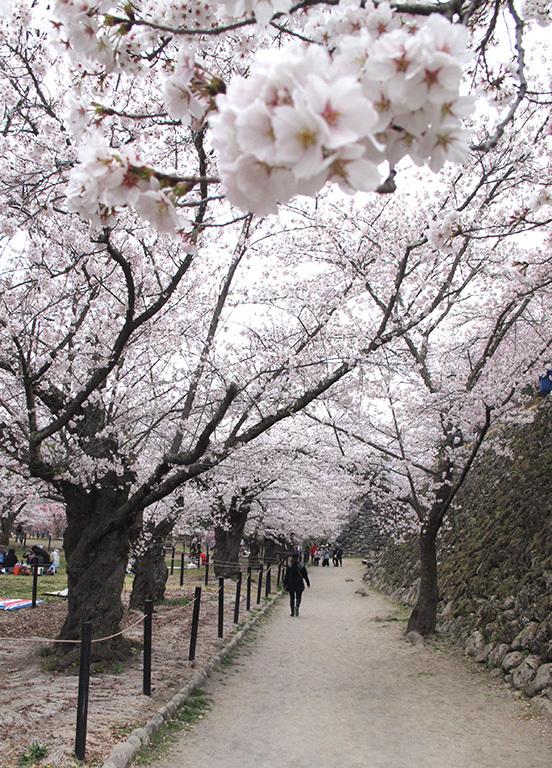春の軽井沢 秘密の飲み会  2019/04/20-sat~21-sun_f0031535_17533533.jpg