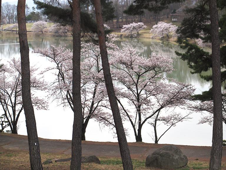 春の軽井沢 秘密の飲み会  2019/04/20-sat~21-sun_f0031535_17534671.jpg