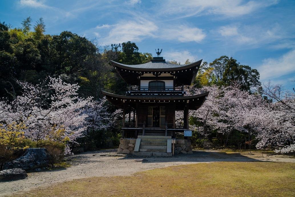 2019京都桜~勧修寺_e0363038_15543978.jpg