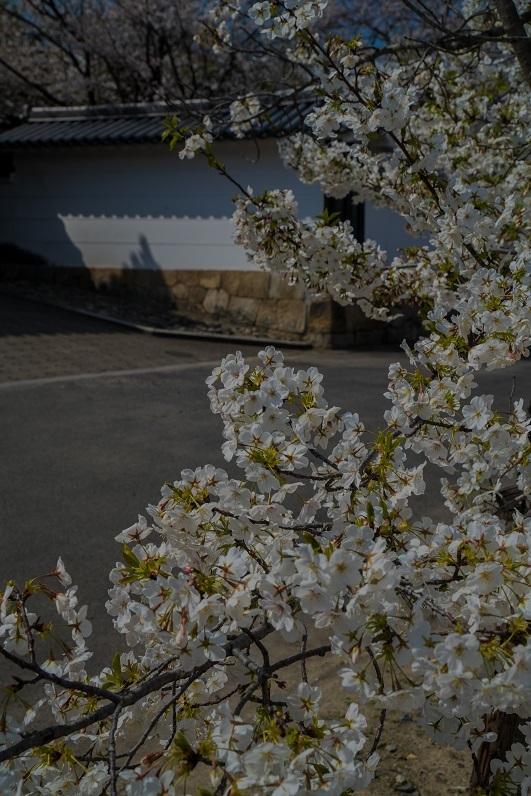 2019京都桜~勧修寺_e0363038_15544395.jpg