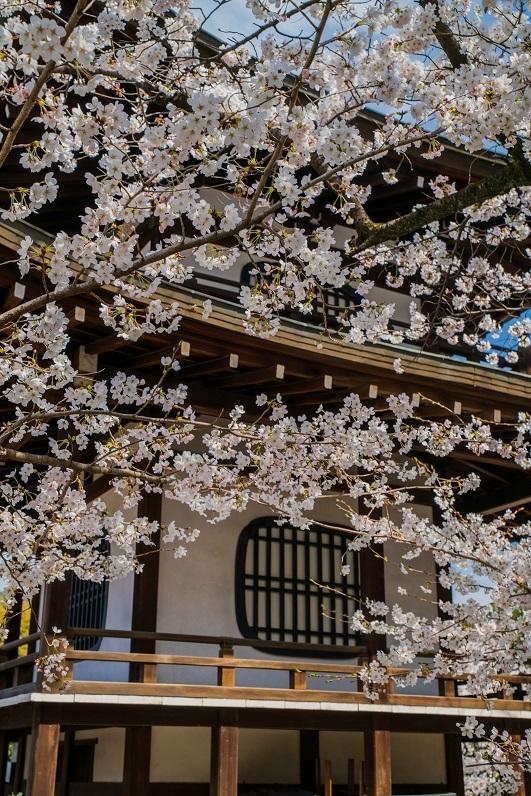 2019京都桜~勧修寺_e0363038_15544875.jpg
