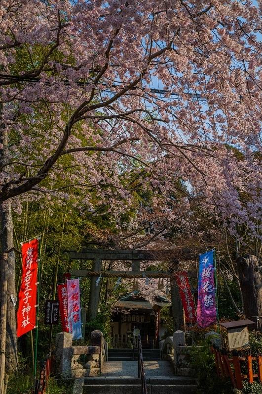 2019京都桜~熊野若王子神社_e0363038_16310227.jpg