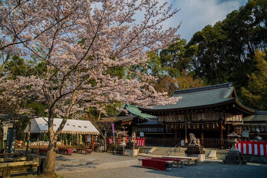 2019京都桜~熊野若王子神社_e0363038_16311580.jpg