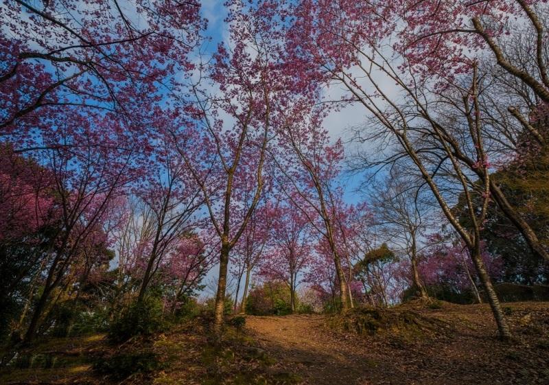 2019京都桜~熊野若王子神社_e0363038_16312316.jpg