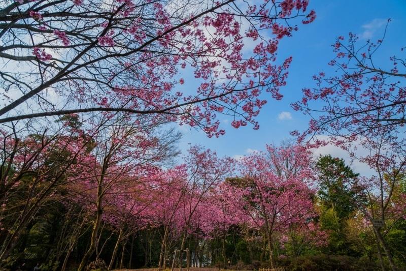 2019京都桜~熊野若王子神社_e0363038_16312783.jpg