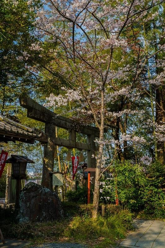 2019京都桜~熊野若王子神社_e0363038_16313597.jpg